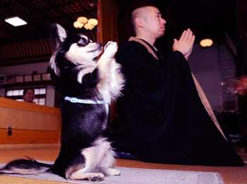 禅师和他的狗