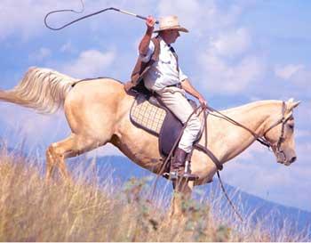老人对骑马人的建议