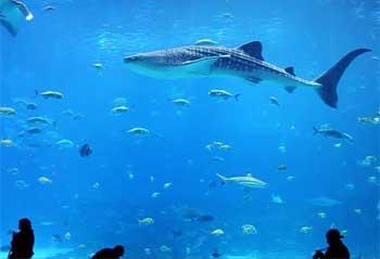 水箱中的鲨鱼