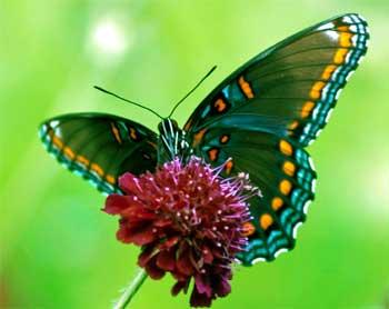 蝴蝶奋斗的故事