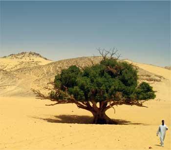 沙漠中的两个旅行者