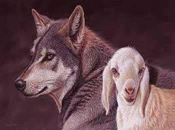 狼与羊羔的故事
