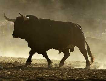 公牛和有钱人的故事