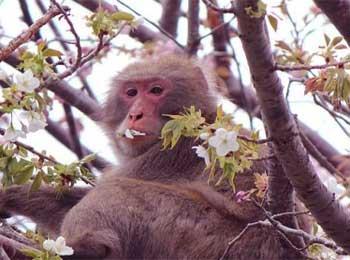 愚蠢的猴子