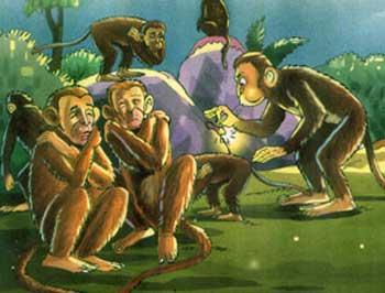 猴子和麻雀