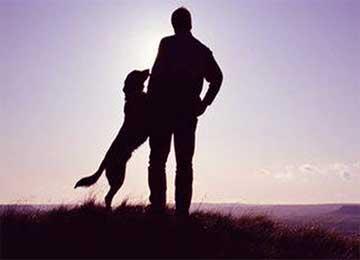 人与狗的友谊