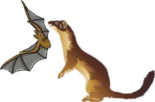 蝙蝠与黄鼠狼