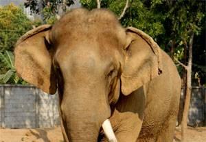 大象和一根绳子