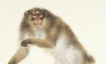 机敏的猴子和熊