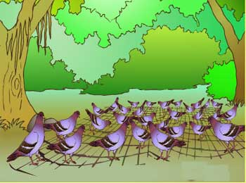 被困的鸽子