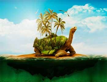 乌龟恐惧症